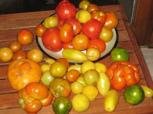 10lbs_tomatoes.jpg