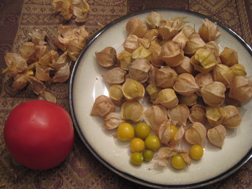 husk_tomatoes.jpg