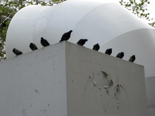 pigeons_row.jpg
