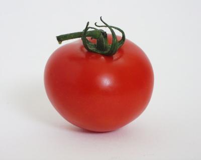 ملف كامل عن زراعة الطماطم  Tomato_pd