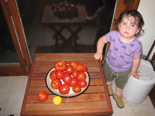 tomatoes_and_phoebe.jpg