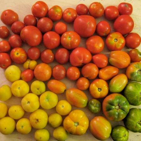 gradient_tomatoes.jpg