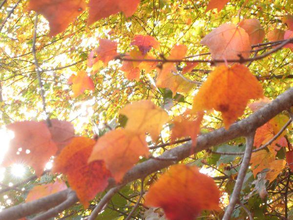 ...leaves.