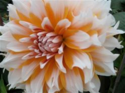 White and orange flower.