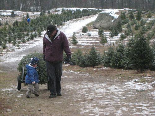 Pulling the tree.