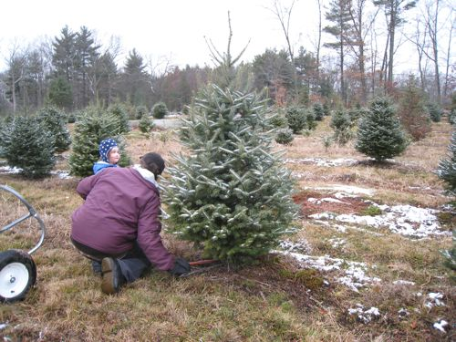 Sawing the tree.
