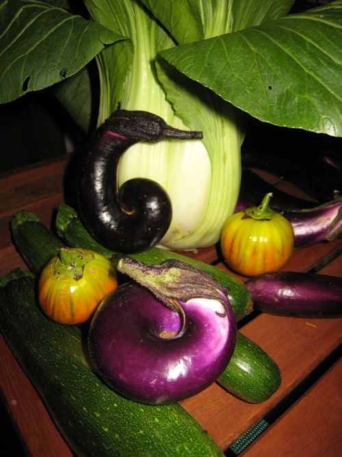 A selection of eggplants, along with some zucchini and bok choi.