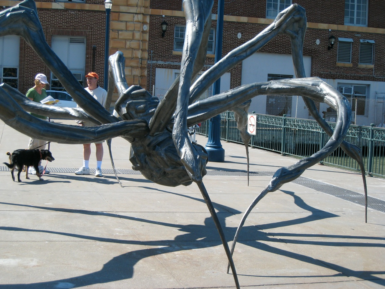 Giant spiders of Northern California (friday foto finder