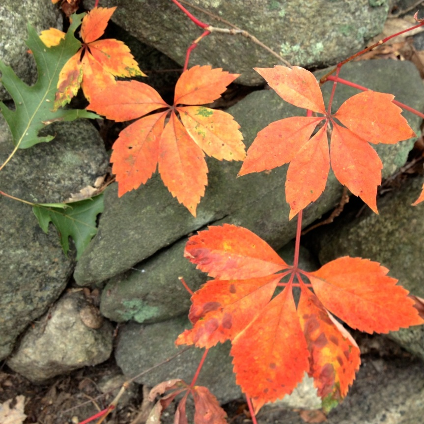 orange leaves