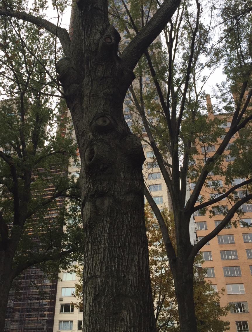 expressive-tree