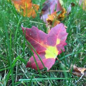 leaf-in-grass
