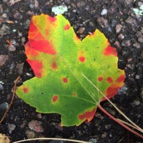 polka-dot-leaf