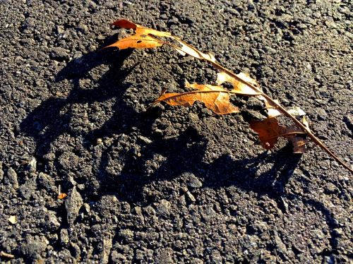 skeltal-leaf-shadow