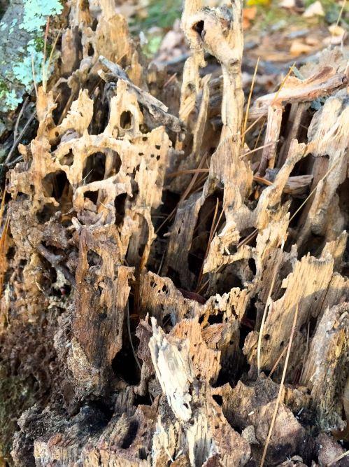 stump-spires-2