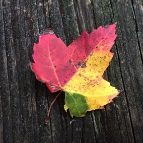 tri-color-leaf