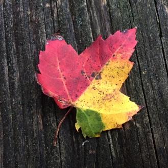 tri-color-leaf