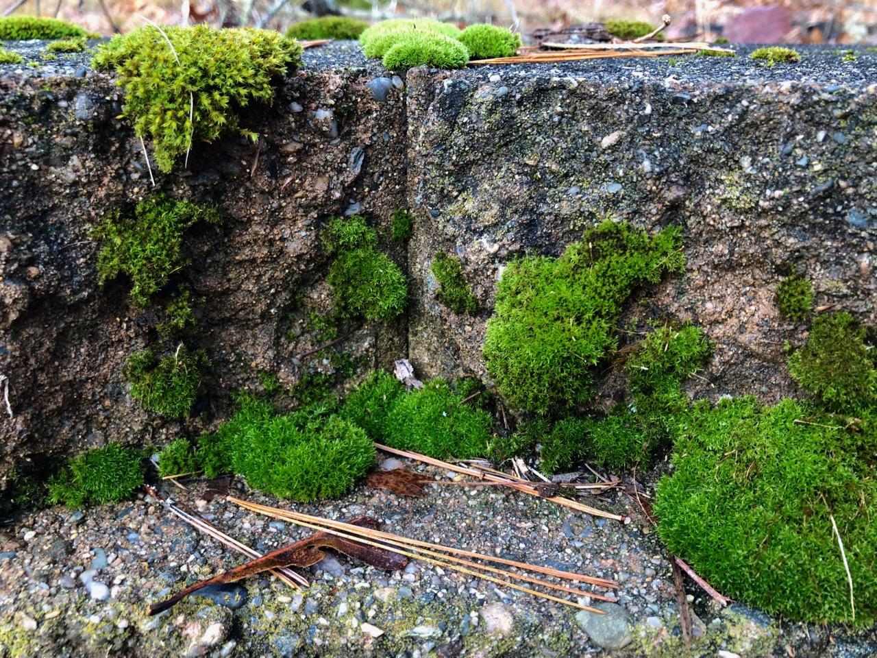 cliff-garden-moss
