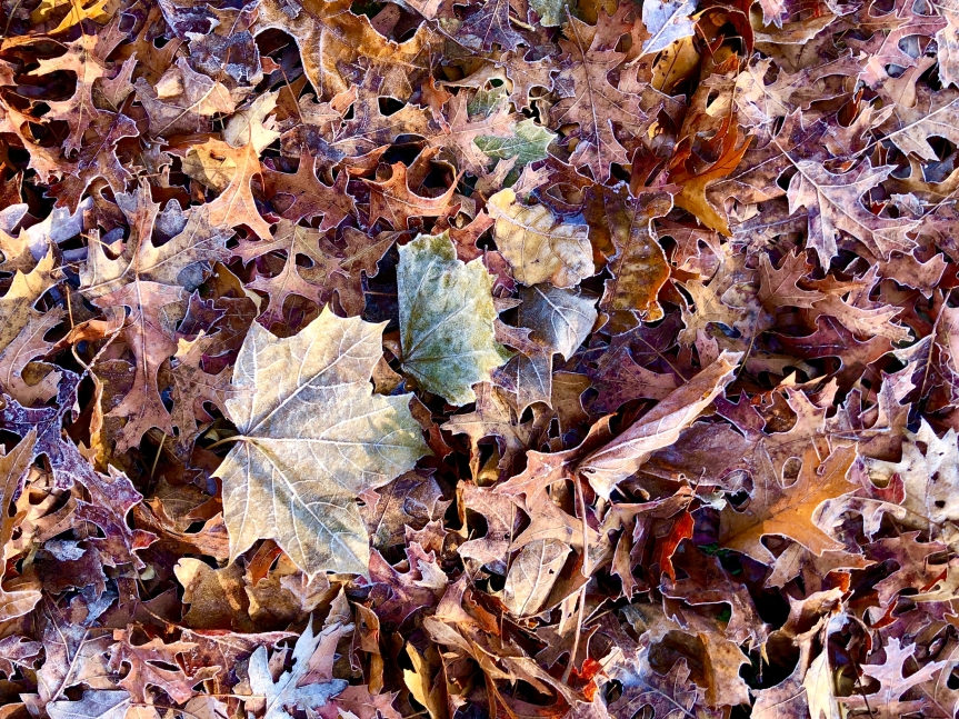 frost-outlined-leaves1