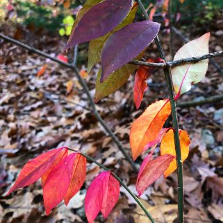 multicolored-leaves