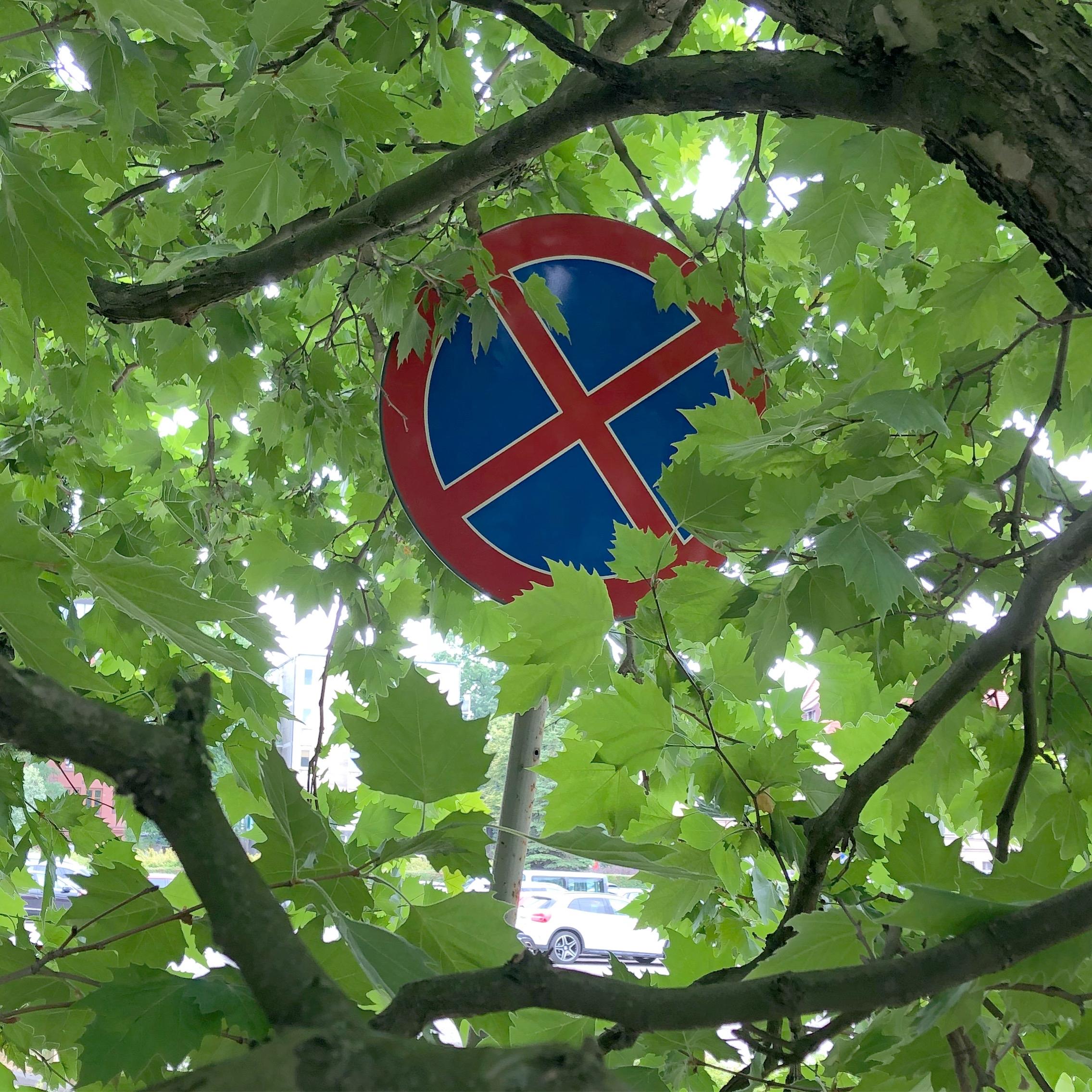 no-tree-parking