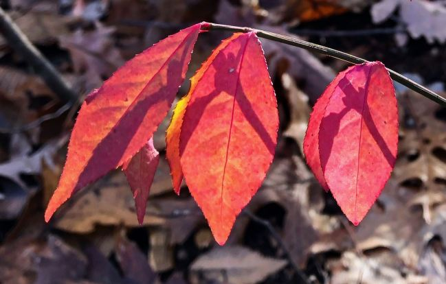 red-leaves-shadows