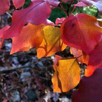 red-orange-yellow-leaes