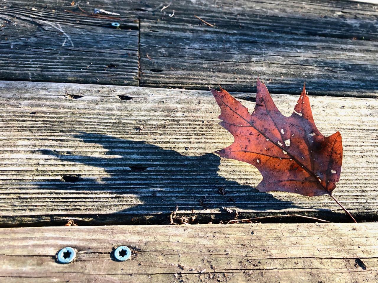 leaf-shadow2-afternoon