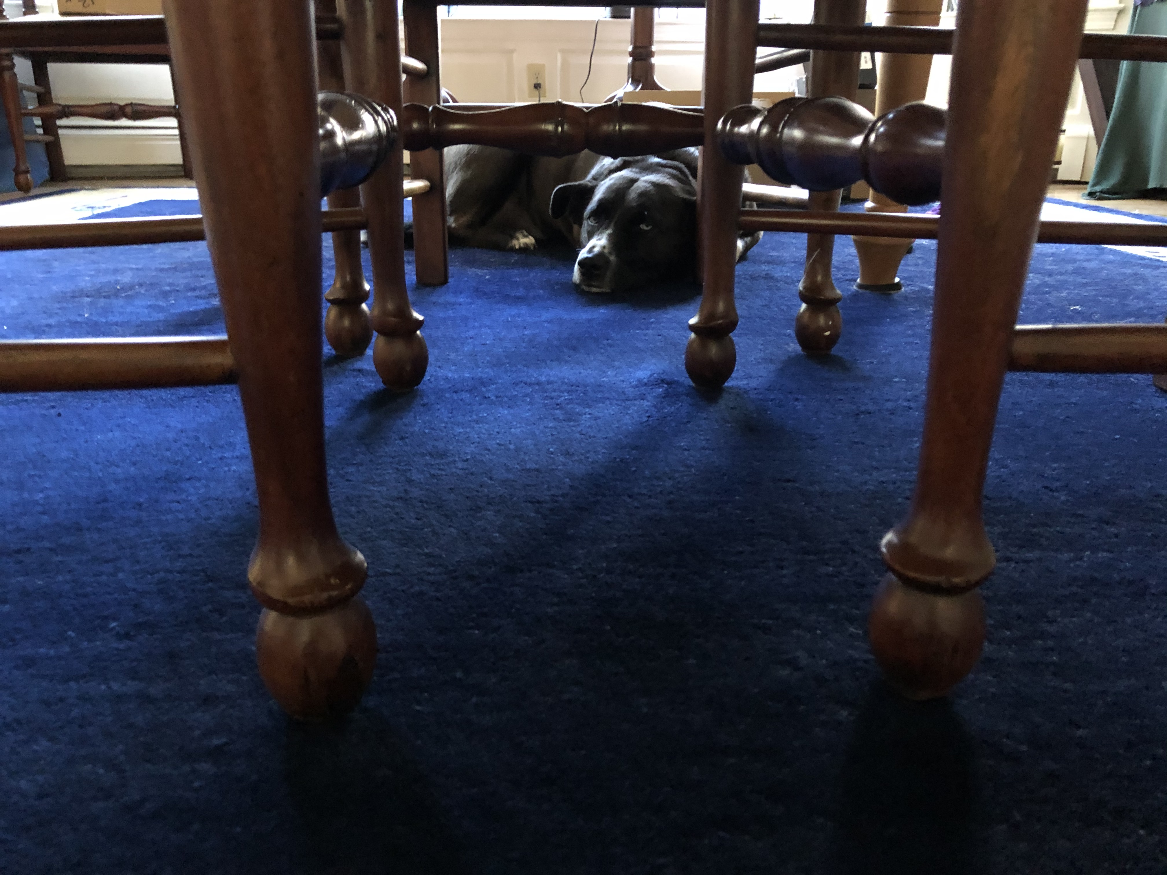 doggo-lair